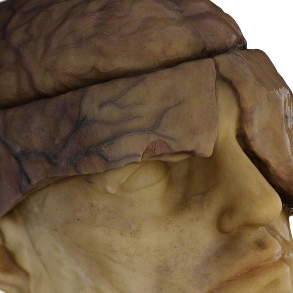 Restauración Virtual de modelo anatómico en cera